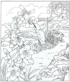 coloring page Nature around the house on Kids-n-Fun. Coloring pages of Nature around the house on Kids-n-Fun. More than coloring pages. At Kids-n-Fun you will always find the nicest coloring pages first! Coloring Pages Nature, Animal Coloring Pages, Coloring Book Pages, Coloring Sheets, Print Pictures, Colorful Pictures, Hummingbird Pictures, Motifs Animal, Free Printable Coloring Pages
