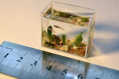 Another 12 of the Coolest Aquariums (cool aquariums, cool fish tanks) - ODDEE