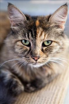Hiya, I'm Jade! I'm a cutie pie from Ipswich. Come and visit me today! http://bit.ly/2j5ApqZ