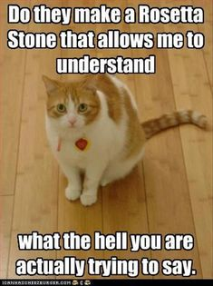 Do they make a Rosetta Stone that allows me to understand what the hell you are actually trying to say. - World's largest collection of cat memes and other animals Funny Cats, Funny Animals, Cute Animals, Silly Cats, Big Cats, Funny Jokes, Hilarious, Animal Quotes, Animal Memes