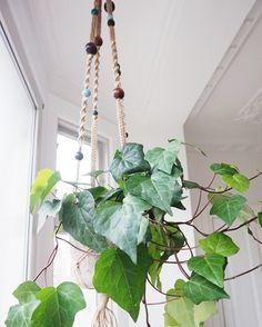 Hanging planter by PLANT Bødker & Clausen. Nørrebro Summers - Blogi | Lily.fi