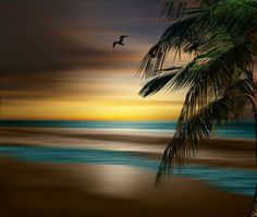 Coastal Wall Art  Photography Palm Tree/ Seagulls/ Brown Blue Yellow Bedroom Decor Matted Picture