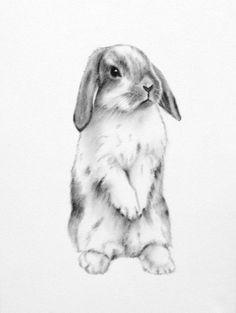 Rabbit Art ORIGINAL 5x7 Charcoal Lop Eared Bunny by JaclynsStudio