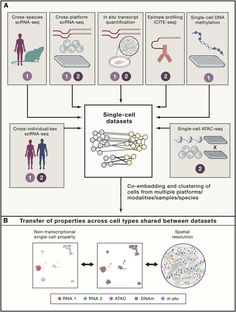 Integration of Single-Cell Genomics Datasets