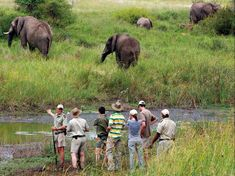 Game drives twice daily to explore our beautiful landscapes & wildlife including the big educational bush walks are a part of your safari experience. Safari Game, Big 5, African Safari, Beautiful Landscapes, Wildlife, Elephant, Activities, Explore, Gallery