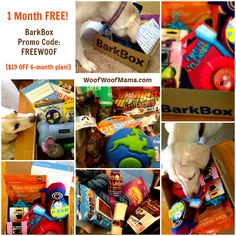 BarkBox Promo Code: One Month Free Mystery Box for Dogs ($19 Savings)!