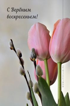 Nice View, Poems, Easter, Joy, Plants, Cards, Gifts, Inspiration, Decor