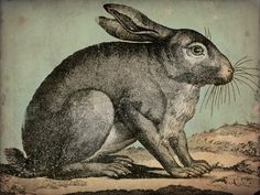 RABBIT Bunny Hare Engraving Gallery Wrapped Stretched Canvas Wall Art 9x12x1.5 inches signed. $69.00, via Etsy.