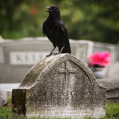 "67 Likes, 6 Comments - @ladylegasus1 on Instagram: ""#crow #birdsofinstagram #graveyard_dead #norfolk #cryptic_aesthetic #theHeavenlyShipsSailOn…"""