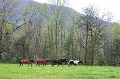We love the horses in Cades Cove!