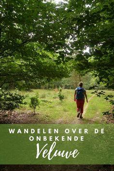Wandelen over ongebaande paden op de Veluwe