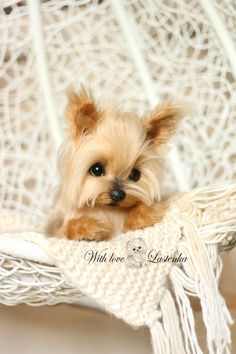 Excited to share the latest addition to my #etsy shop: Yorkie Precious Portrait Artist dog mohair collectible toy OOAK puppy Yorkshire Terrier pet handmade animal by photo (made to order) http://etsy.me/2pwQTdT #toys #beige #gold #dog #puppy #bestgift #yorkie #petrepli