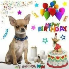 New Ideas aniversário mulher feliz - Birthday Cakes - Aniversario Happy Birthday Chihuahua, Happy Birthday Emoji, Happy Birthday Girls, Happy Birthday Pictures, Happy Birthday Wishes, Happy Birthdays, Birthday Greetings For Facebook, Birthday Messages, Birthday Qoutes