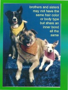 Great advice from dogs! Pet Postcard Project