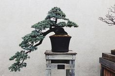 Amy Merrick of http://emersonmerrick.blogspot.com/ has stolen our hearts with this simple and classic bonzai tree.