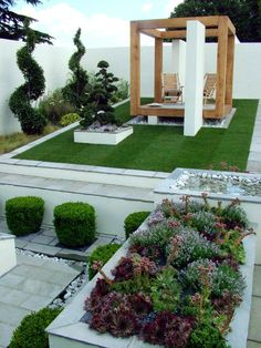 Small, modern garden with succulents and topiary. The white walls really give it a clean look and make the spirals stand out.
