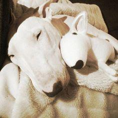 Custom dog portrait soft toy dog replica TO ORDER