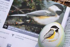 Eggs for Ornithology