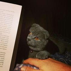 İ read the book to my daughter every night