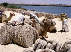 Chad, Camel country