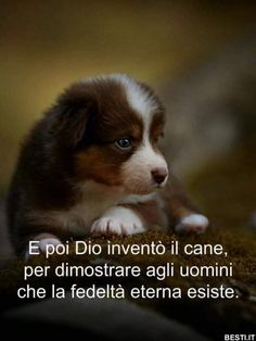 E poi Dio inventò il cane. I Like Dogs, Cute Cats And Dogs, Dog Love, Animals And Pets, Funny Animals, Cute Animals, Mutt Dog, Dog Cat, Sad Pictures