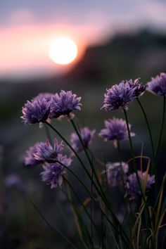 Shared by shooting star. Find images and videos about nature, flowers and purple on We Heart It - the app to get lost in what you love. All Nature, Nature Images, Amazing Nature, Wild Flowers, Beautiful Flowers, Colorful Flowers, Purple Flowers, Cool Pictures, Beautiful Pictures