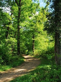 Country road in the woods [photographer and location unknown] 🌳cr. Landscape Photography, Nature Photography, Natures Path, Summer Scenes, Forest Path, Walk In The Woods, Nature Scenes, Nature Pictures, Pathways