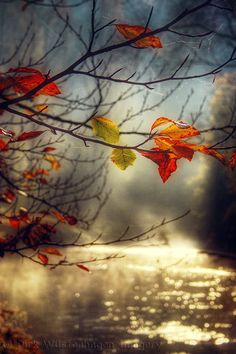 """""""I admit now, Austin, that autumn is most beautiful, and spring is but the least, yet they 'differ as stars' in their distinctive glories.""""  - Emily Dickinson [Pin credit -golden stream by Dirk Wüstenhagen on 500px]"""