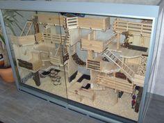 I'd replace the la… – Amazing indoor wooden cage. I'd replace the la… – Hamster Diy Cage, Gerbil Cages, Hamster Life, Ferret Cage, Hamster Toys, Pet Mice, Pet Rats, Vivarium, Habitat Du Hamster