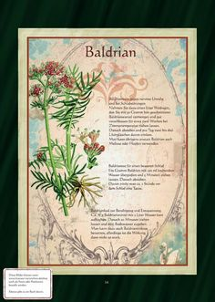Valerian (Valeriana officinalis) is calming helps us against test anxiety Healing Herbs, Medicinal Plants, Companion Planting, Edible Garden, Fantastic Art, Aquaponics, Girl Blog, Growing Plants, Container Gardening
