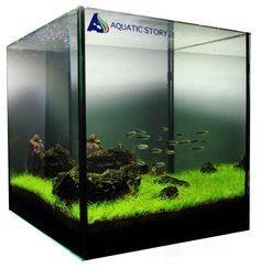 1000+ images about Aquascapes on Pinterest Brandy glass, Ferns and ...