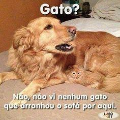 CUMPLICIDADE! ❤️ #petmeupet #cachorroterapia #cachorro étudodebom #caopanheiro #caopanhia #gato #gatinho #gatofofo #amoanimais #maedepet #cachorro #filhode4patas