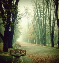 Autumn in Cluj-Napoca, Romania Healing Images, The Road Not Taken, Eastern Europe, Places To See, Paths, The Incredibles, Landscape, World, City