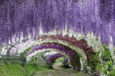 全部知ってる?米国CNNが選んだ『日本の最も美しい場所』31選 4枚目の画像
