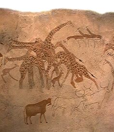 Rock painting from the Tasili-n-ajjer region of the central Sahara: these images of a type of giraffe living in the central Sahara during the Halocene Wet Phase are only a small part of the evidence pointing to a savannah Sahara at this time.