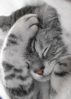 I has a stress headache!