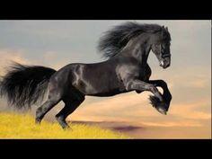 "Susan Boyle - ""Wild Horses"" http://youtu.be/U5Mtzn_bLFg"