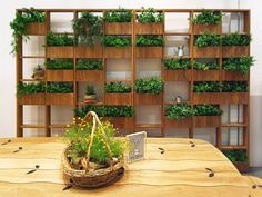 green wall by atsushi koike . one could transform bookshelves to a greenery display of small plants/herbs/flowers pots Green Garden, Herb Garden, Balcony Garden, Garden Living, Plant Wall, Plant Box, Small Gardens, Vertical Gardens, Garden Inspiration