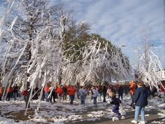"""""""Rolling"""" Toomer's Corner: After sports victories, Auburn students TP the trees at Toomer's Corner (the center of town where campus meets the city of Auburn). #auburn #au #tigers"""