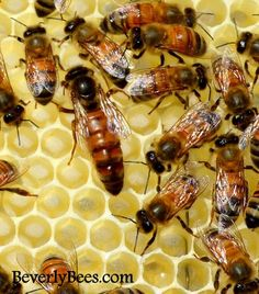 Great blog to follow for present and future questions I may have! Backyard Beekeeping Blog- Beverly Bees