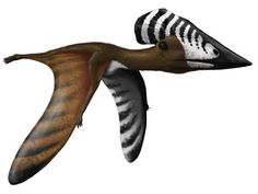 Pterosaurs are an extinct diverse group of flying reptiles that lived in the Age of Dinosaurs Curious Creatures, Weird Creatures, Fantasy Creatures, Reptiles, Large Animals, Animals And Pets, Prehistoric Creatures, Prehistoric Age, Extinct Animals
