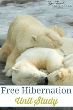 continues, many animals began the process of hibernation. During the summer, they eat to gain weight. During the early fall, they make nests or build dens. Then as temperatures get colder, they settle in for a long winter's nap.