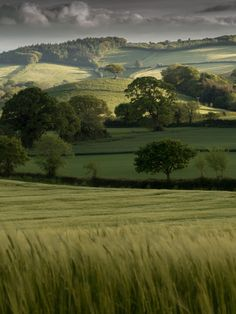Beautiful rolling hills, trees & pastures in varying shades of green!