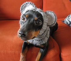 Knitted Dog Hat with Ears Easy Free Patterns | The WHOot