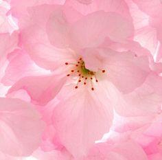大阪 花 #Osaka #Japan #flower Osaka Japan flower