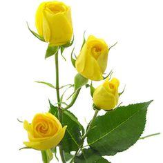 Rosas amarillas ramificadas