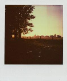 #sunset #summer #trees #green #nature #sky #polaroid