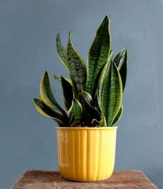 Bright yellow ceramic planter circa - 1950