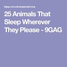 25 Animals That Sleep Wherever They Please - 9GAG