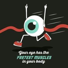 fact themoreyouknow vision muscles eyes see ophthalmology optometry Optometry Humor, Optometry Office, Eye Anatomy, Eye Facts, Under Eye Mask, Lake Oconee, Eye Center, Optical Shop, Eye Exam